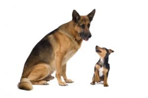 Doi câini (fabulă)